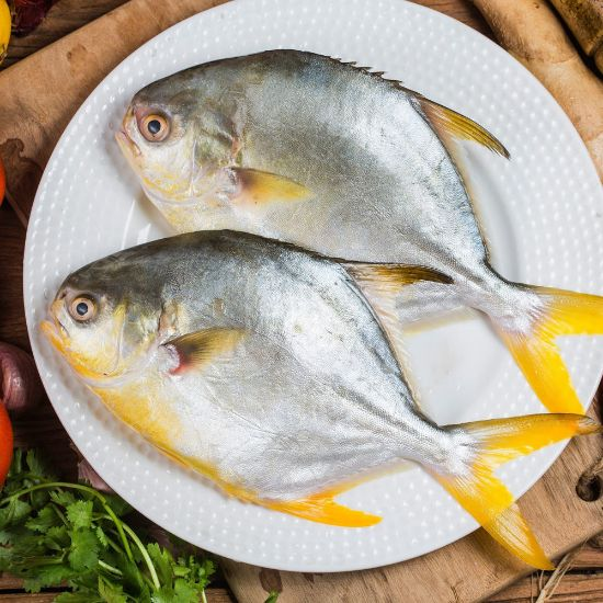 Picture of Golden Pomfret scaled